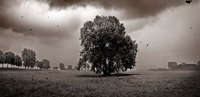 storm-tree-410-200